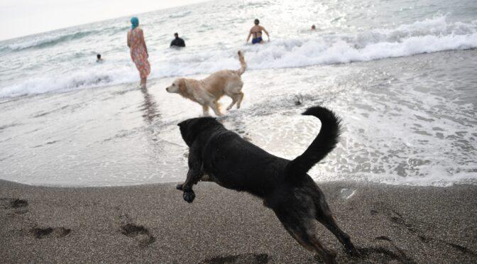 Россиянам запретили приводить на пляж животных и плавать на бревнах